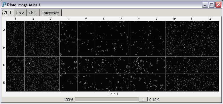 A plate image atlas displaying scan images of all channels and                composite images for HCS data analysis and visualization